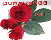 rose red pure love set2
