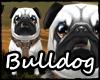 Bulldog (Branco)