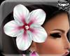 ! Hawaii flower R