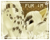 .M. Steamy Fur M