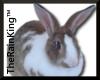 Tobias the Bunny