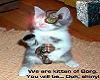 Kitten of Borg