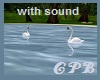 Animated Swans w/sound