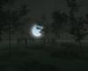 haunting night woods