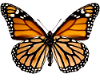 TF* Butterfly