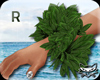 ! Hula green FM R