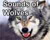 Sounds of the wolf