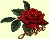 Love Red Rose