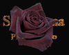 black Rose 2