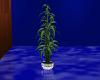 {S}Reflect Retro Plant 1