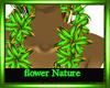 furry flowernature