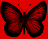 red butterfly pet