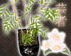 *BRWH* Potted Bamboo