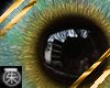 }T{ anna eyes Male