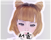 서울 Honey Shuuko.