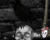 ╃Upon a Raven Skull