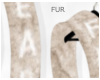 (Fur|Fear-Cub