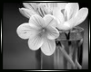 Sale White Flowers/Vase