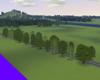 European Tree Row 24