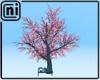 [ni] Sakura
