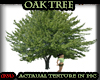 (PM)Oak Tree derivable