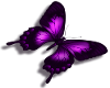 {R} purple butterfly sm