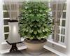 [Luv] 4B - Plant 2