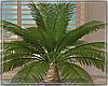Palm Tree/Animated