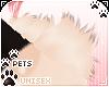 [Pets] Dei | shldr tuft