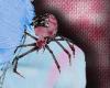 [S] Candy Goth Spider
