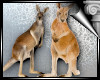 d3✠ Kangaroo 2 Enh