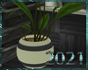 💀|Med. Plant 3