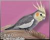Parrot Hd. F :ᚠ: Drv!
