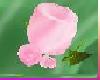 [TGUU] ROSE PIN Pink