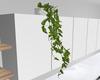 Minimal Vine plant