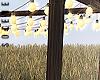s | Pergola w Lights