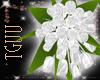 [TGUU] White Silk roses