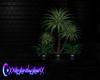 Teal Moon Plant