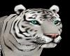 Tiger Pet White