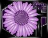*PAC* Bloom Daisy