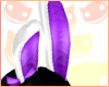 ~R~ Party bunny ears prp