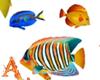 Fish Reef Anim Dev