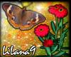 *LL* Butterfly/Flower