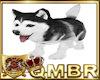 QMBR Husky Puppy