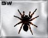 Spider Club Effect