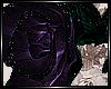 + Purple Rose +