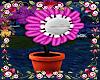 *Animated Carnivor Plant