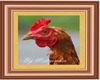 Chicken framed picture