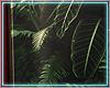 ○ Tropical Frame IV