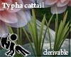 [Hie] Typha cattail derv
